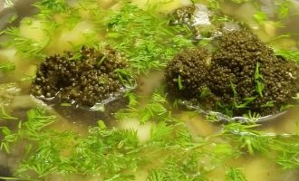 Фото куриного супа с брокколи