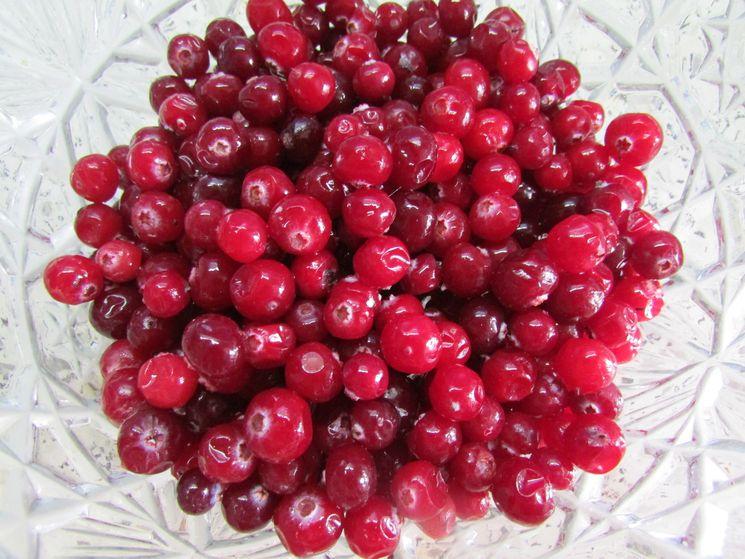 Морс из клюквы с фруктами